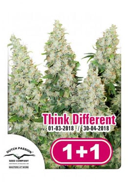 Dutch Passion - Think Different ® (auto/fem.) Promo 2x1